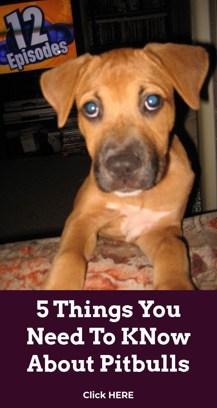 Look At The Web Click The Link For Even More Choices Best Dog