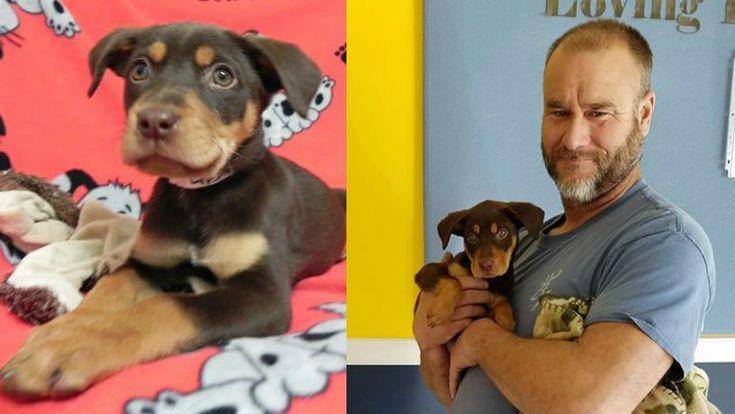 WESTFIELD, Ind. The search for a puppy stolen during an