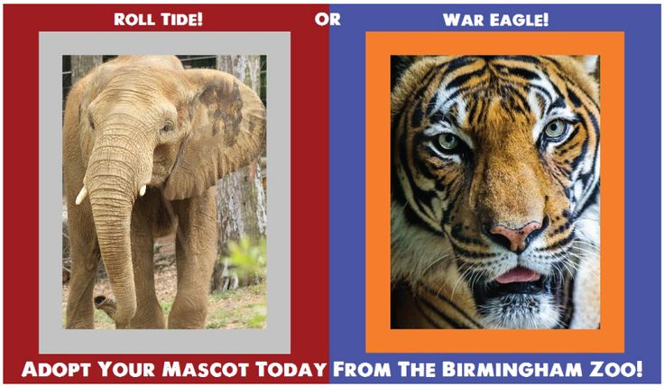 We're kicking off October with exciting news for football fans! Whether you're an Alabama fan, an Auburn fan or a house divided, you can support your team and the Birmingham Zoo by adopting an animal like Kumar the Malayan tiger and Ajani the African elephant today. Adoptions begin at only $25 and all proceeds directly benefit the animals at the Birmingham Zoo. Show your support and adopt your mascot or any of our other animals on the adoption list today!