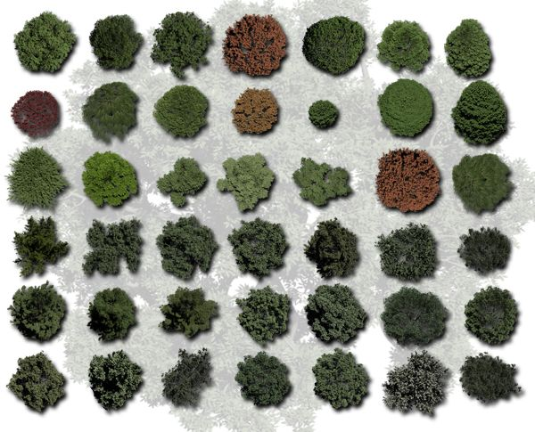 Garden Landscape Sketch