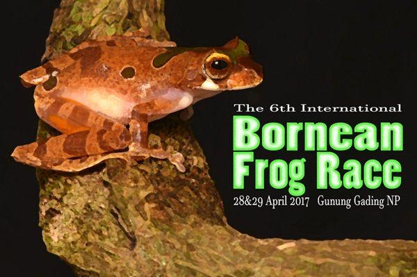 6th International Bornean Frog Race 2017 | Tourism Malaysia