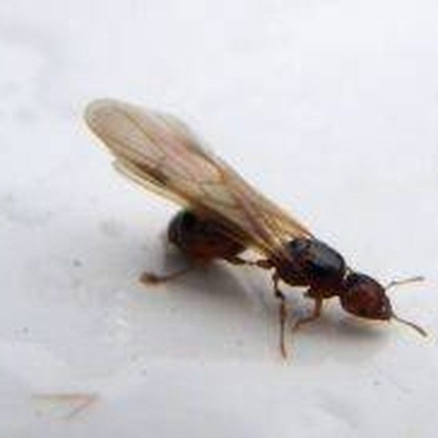 17 Best Images About Termites On Pinterest How To Get