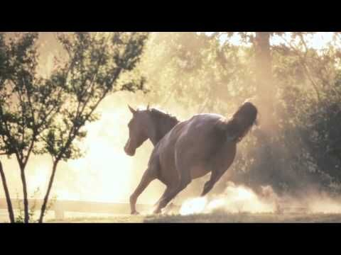 beautiful pictures of horses in nature