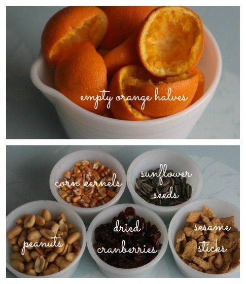 orange cup bird feeder - happy hooligans - nuts/berries/seeds/grains