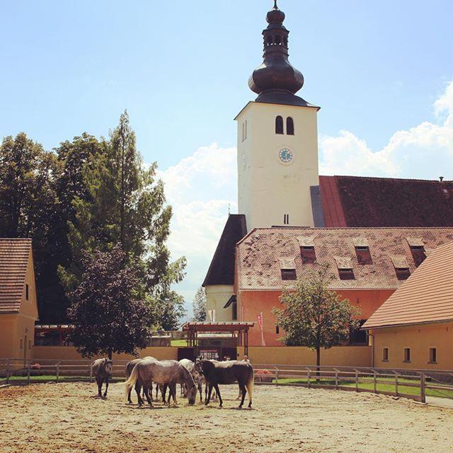 #piber #lipizzaner #lipizzanerheimat #lipizzanerhorses #piberstudfarm #horses…
