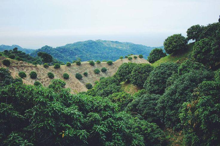 Те самые манговые сады. Непонятно то ли манго уже собрали то ли поспели лишь первые плоды но на деревьях манго не видноа на дороге валяется много... Хороших спелых и нечервивых. За вечер и утро мы восполнили тоску по манго и в итоге перестали их подбирать:) После манговых садов мы спустились в совсем обычную суетную жизнь где закончилось это маленькое по размерам но такое громадное по ощущениям приключение. Спустиоись мы со стойким ощущением что в Сьерра Невада де Санта Марта мы еще…