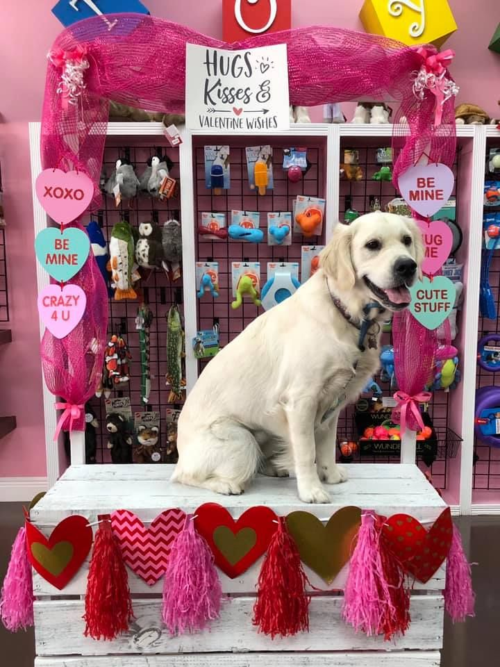 Don T Forget To Spoil Your Pet With Goodies From Woof Gang Bakery