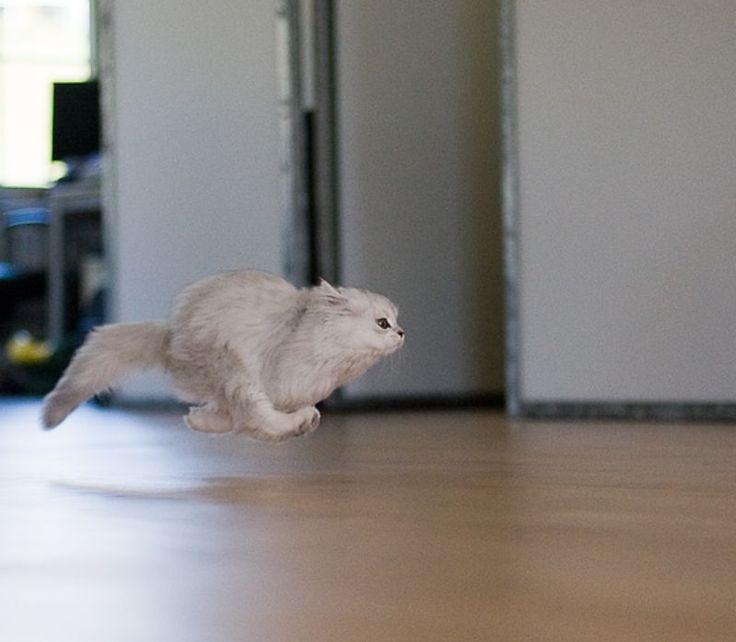 cat on the run.