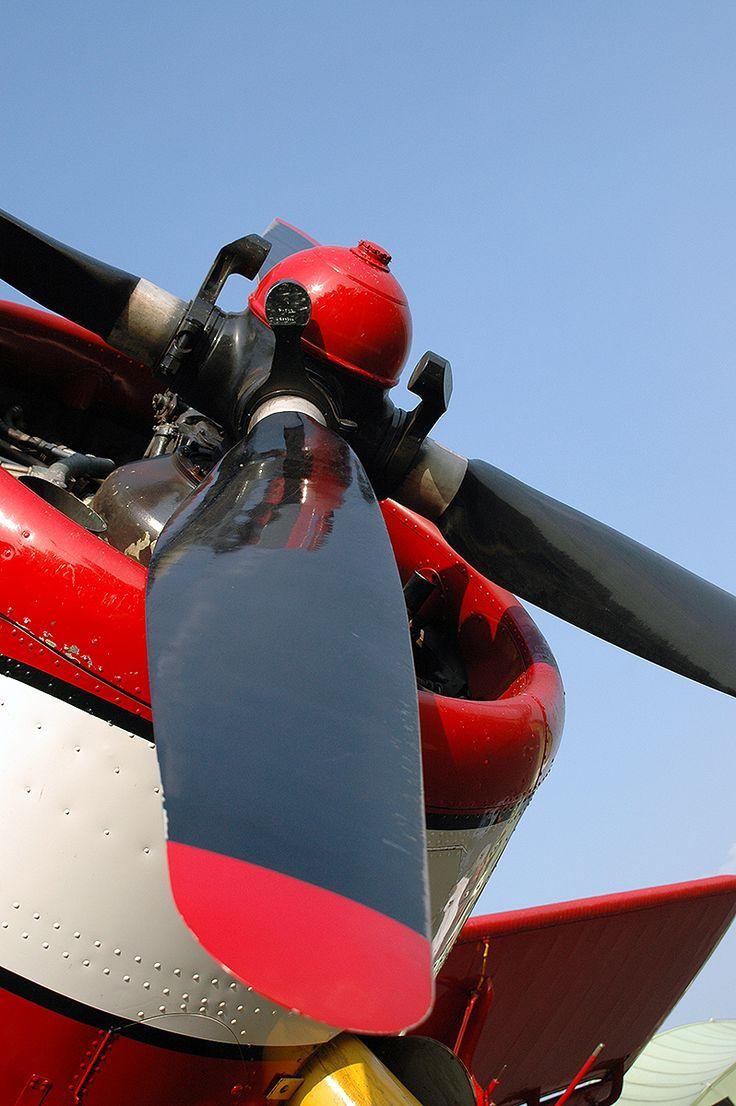 Air Albatros AN2, D-FONE