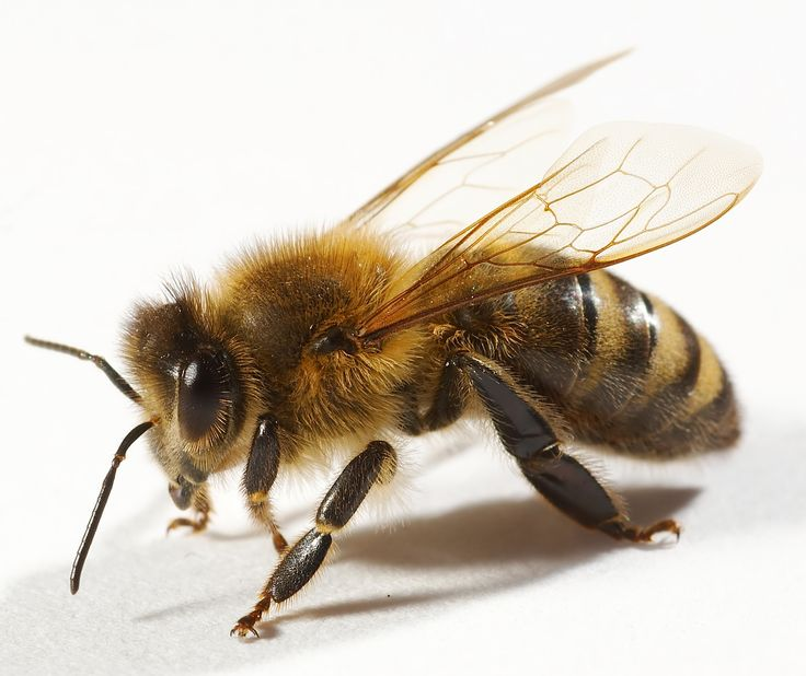beauty in the bee*