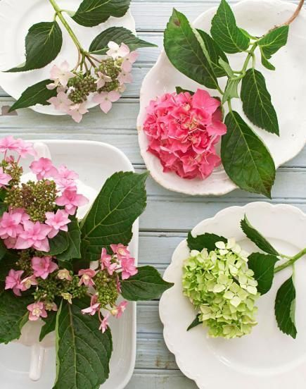 A guide to growing hydrangeas in the Midwest: http://www.midwestliving.com/garden/flowers/favorites/heavenly-hydrangeas/page/0/0
