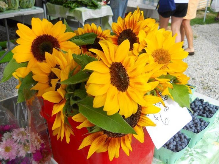Hubbards Farmers' Market sunflowers.