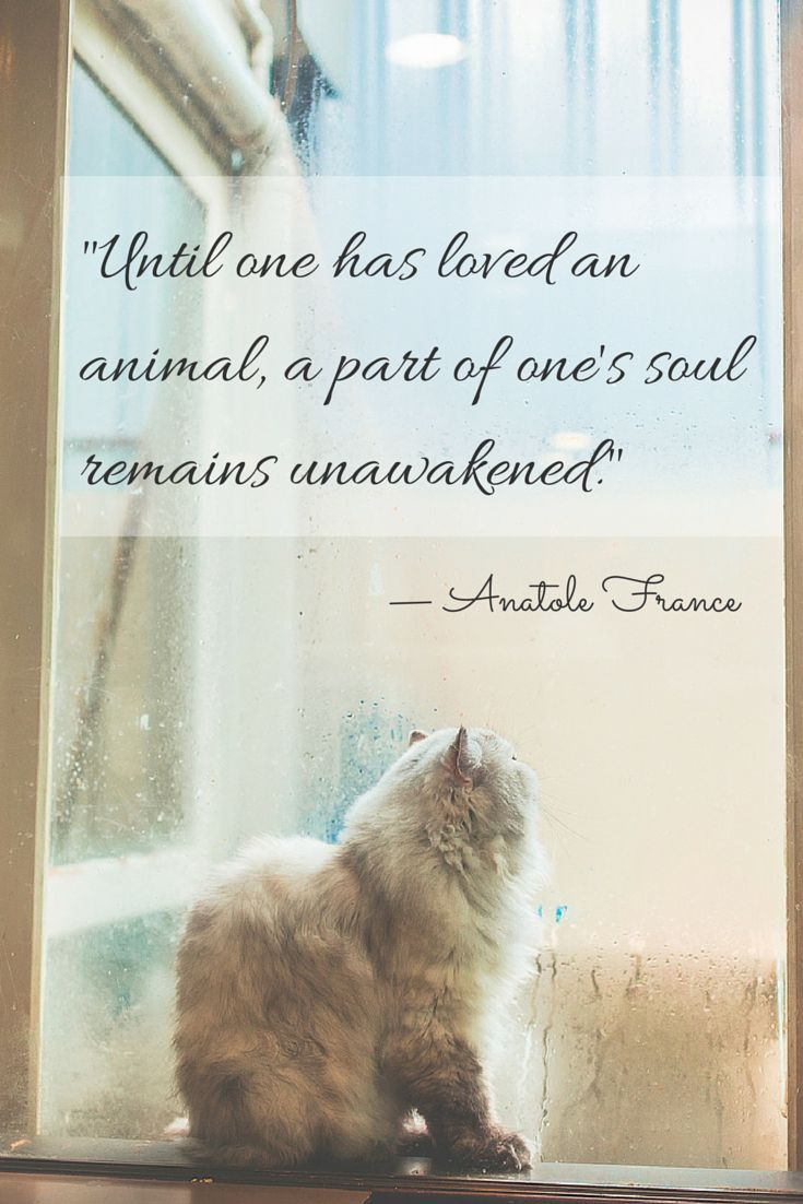 """""""Until one has loved an animal, a part of one's soul remains unawakened."""" — Anatole France"""