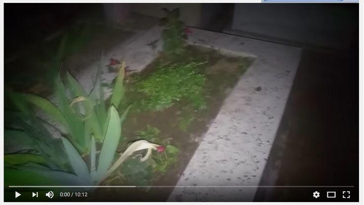 PARAPSİKOLOJİ & GİZEM DOSYASI /// VİDEO : Karadul Mezarlığındaki Ölülerin Korku Dolu Hikayeleri !