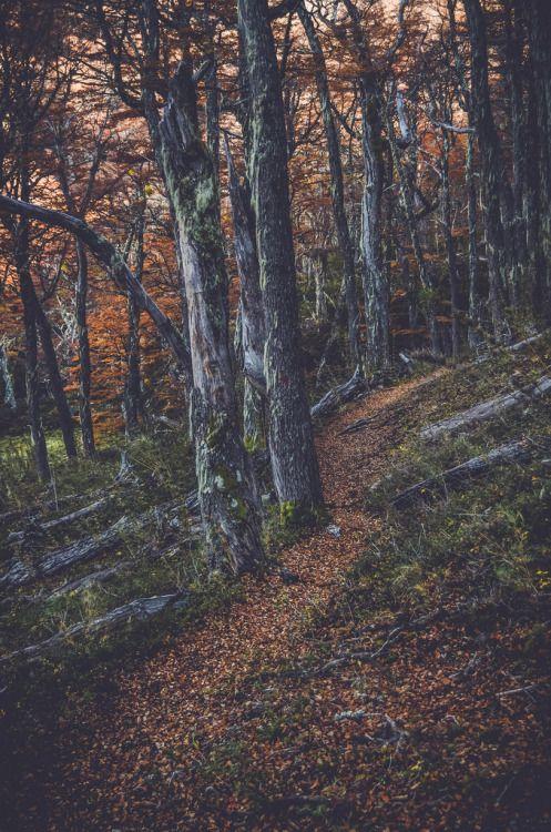 pela-schmidt:  Pela Schmidt ƒotografíaXinstinto Tumblr | Flickr...