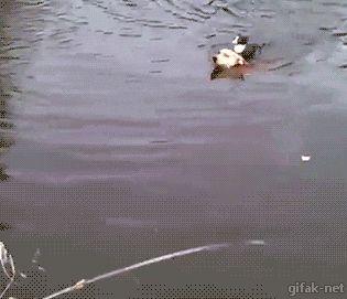 犬かき上手だにゃ〜♫