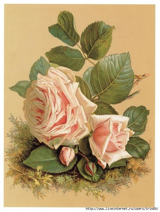 Крестной крестницы, открытка розы в конвертер