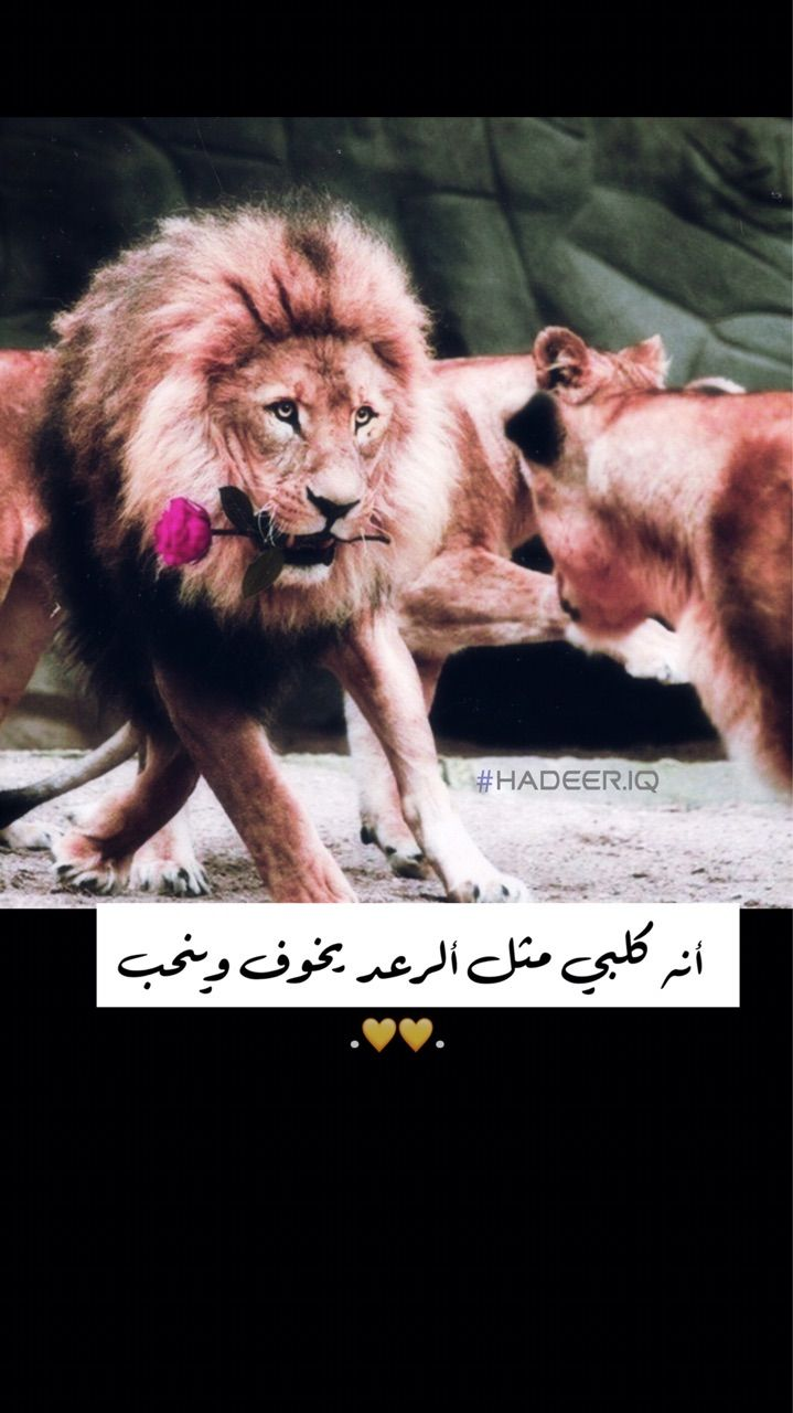 حب زواج رمزيات لبوه اسد Lion The Magicians Syfy Ariana Video The Magicians