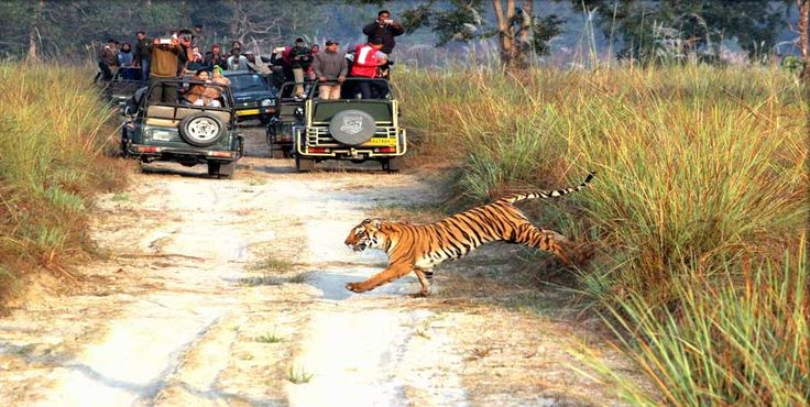Safari Packages, Hotel SPA Resorts Book Jeep Safaris at INR 5500 only Book Jim Corbett Safari Online. For more http://www.corbettthebaagh.com  Jim Corbett National Park - Tour Package!!!  Safari, National Park & Landscape - Jeep Safari (Landscape): INR 5500 Jeep Safari (National Park): INR 7000