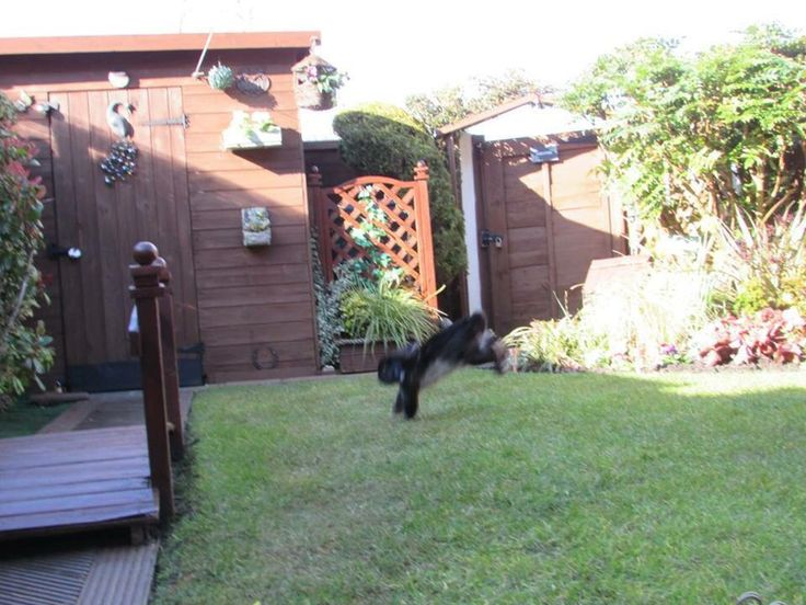 #binkyday rabbits love to run, zoom and jump...this is binkying and a sign of a happy rabbit. A hutch is not enough