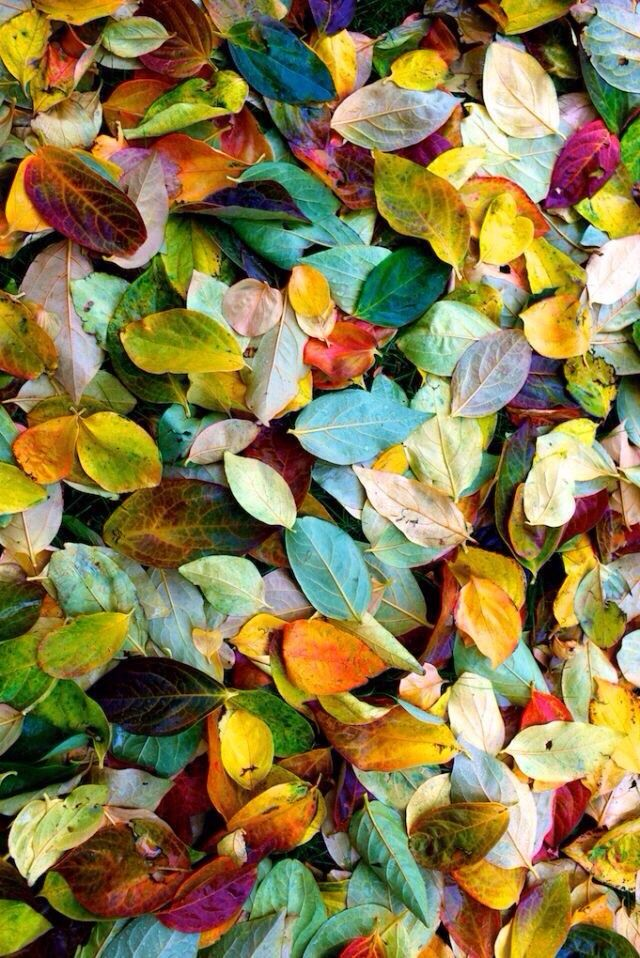 fallen leaves....beautiful