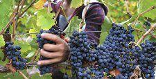 Seña 2013 alcanza 99 puntos y se convierte en el vino chileno con mejor puntaje de la historia