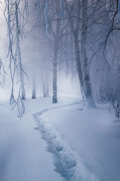 Snowy path | Magic forest by Alexei Mikhailov on 500px via http://theperfectworldwelcome.tumblr.com/post/69873937827/chickie-daddy-wildman64-0ce4n-g0d-magic