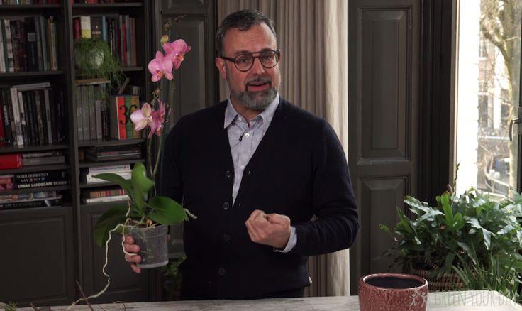 De orchidee is een prachtige plant. Maarhoe je 'm goed verzorgt, blijft voor veel mensen een raadsel. Romeo Sommers legt het je in deze video duidelijk uit. Nu weet je voor eens en altijd wat je wel en niet moet doen. Verzorging Het verzorgen van een orchidee is eigenlijk niet moeilijk, maar toch gaat het…