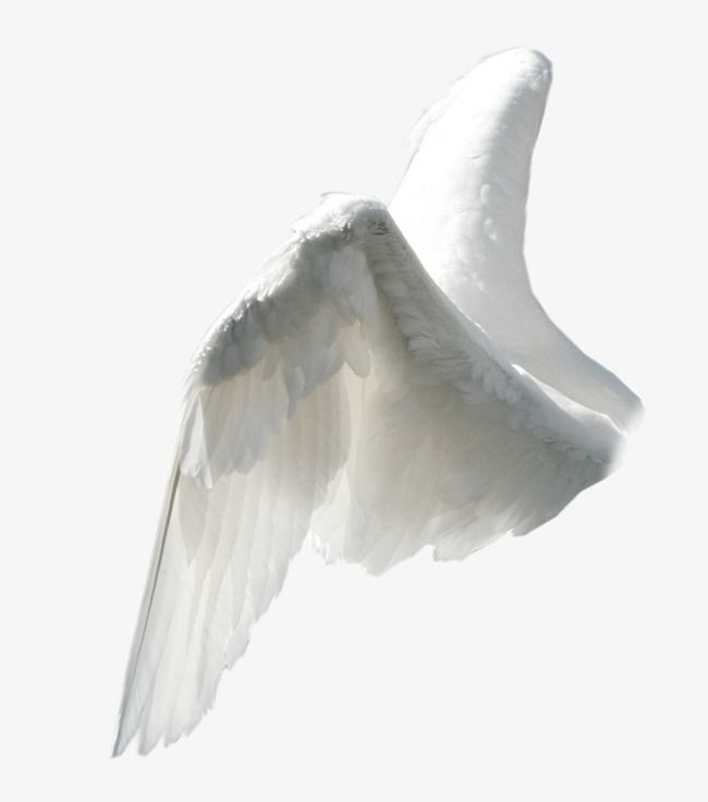 Wing, Animation, Angel PNG Transparent Image and Clipart for
