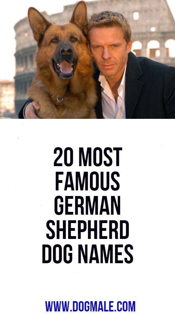 20 Most Famous German Shepherd Dog Names Dog Names German Dog