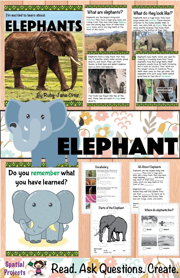 1220 best All about ELEPHANTS images on Pinterest | Elephant parade ...