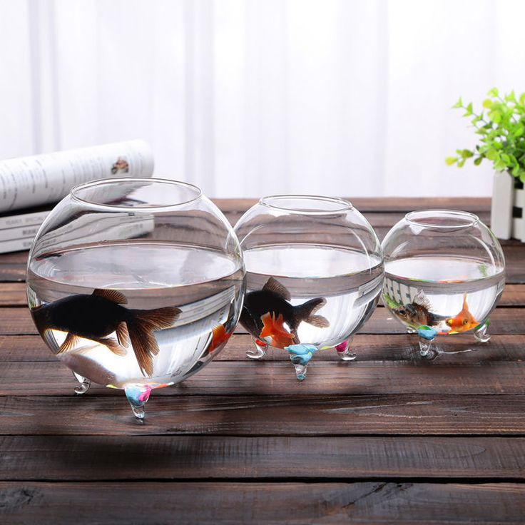 Clear Glass Vase Fish Tank Ball Bowl+Feet/ Succulents Planter Terrarium Hydropon