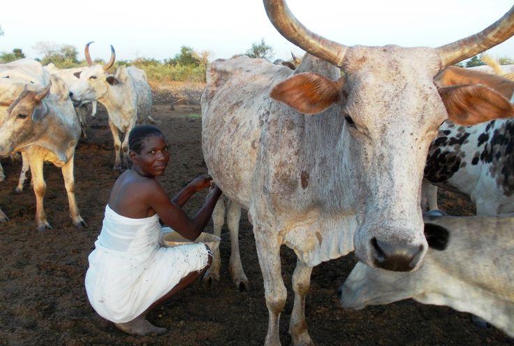 Mungitura. Nanoro. Burkina Faso.