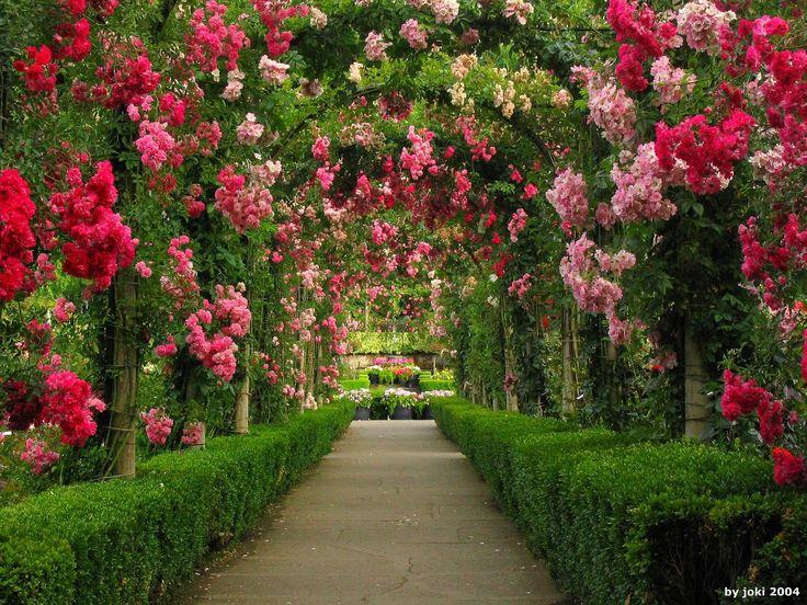 Leia sobre Bem Estar e Qualidade de Vida: É Primavera! As Rosas voltam ao Jardim