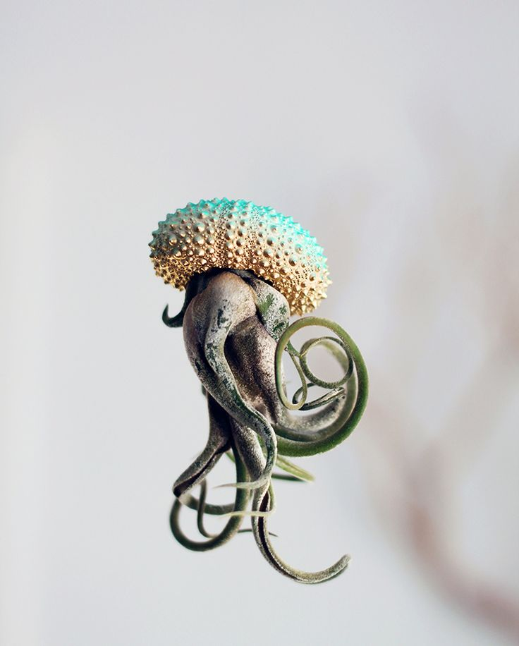 Air Plant Jellyfish by 'PetitBeast'  http://www.thisiscolossal.com/2015/01/air-plant-jellyfish-by-petitbeast/