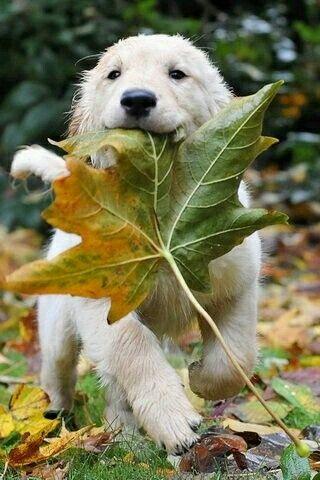 I don't like leafs
