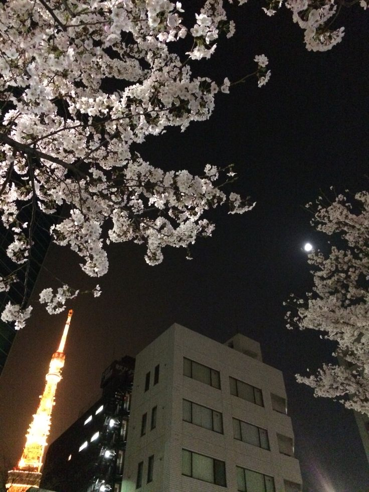 Tokyo tower, moon and cherry blossoms