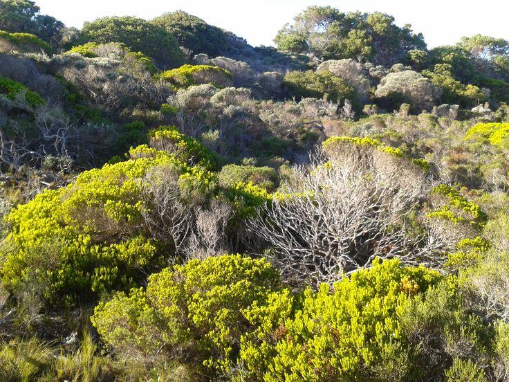 You got to love coastal Fynbos........