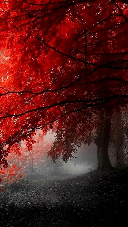 Red leaves.