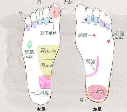 膀胱と腎臓の足つぼで脚のむくみを解消! | 着圧ソックスのメディキュット