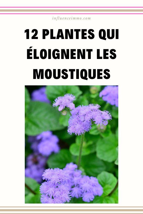 12 PLANTES ET HERBES QUI REPOUSSENT NATURELLEMENT LES MOUSTIQUES