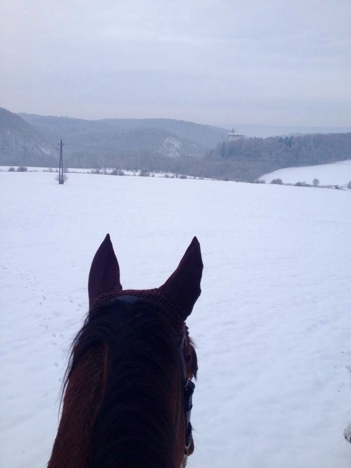 Winter 2014, new year riding in the snow :) #winter #horse #snow