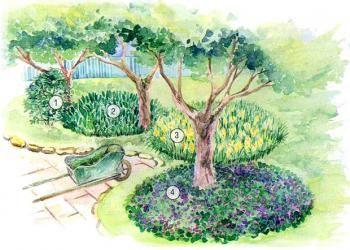 Душистые мини-цветники вокруг деревьев 1 - Волчеягодник смертельный (Daphne mezereum), 2 - Ландыш майский (Convallaria majalis), 3 - Нарцисс гибридный (Narcissus х hybr.), 4 - Фиалка душистая (Viola odorata).