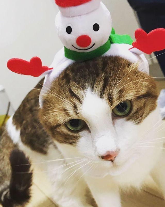 なかなか撮るの難しい。。 疲れ過ぎてハイになる。 🐱 🐱 #ハロ#アイン#アインとハロ#猫#ネコ#猫好き#かわいい#ネコモ#にゃんすたぐらむ#猫グッズ#ニャンとも#愛猫#catloversclub#ネコ部#kawaii#にゃんだふるらいふ#ペコねこ部#ねこ部#menw#みんねこ#またたび堂#ねこバカ #ねこのかぶりもの #奇譚クラブ
