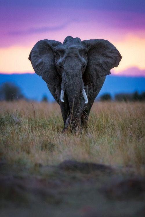 sublim-ature: African Elephant (Kenya)Mark Dumbleton