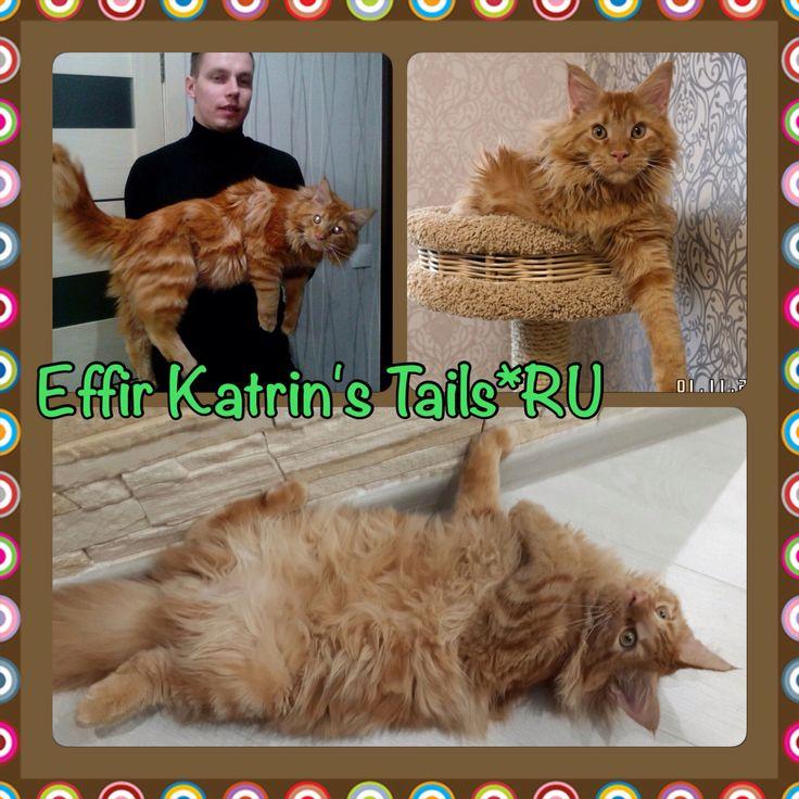 Effir Katrin's Tails*Ru наш выпускник 7 месяцев