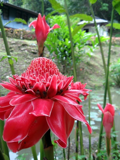 103 best plants and their names images on pinterest for Garden plants names and pictures