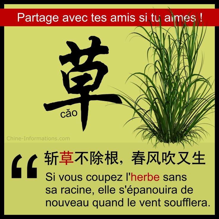 """herbe"" en chinois"