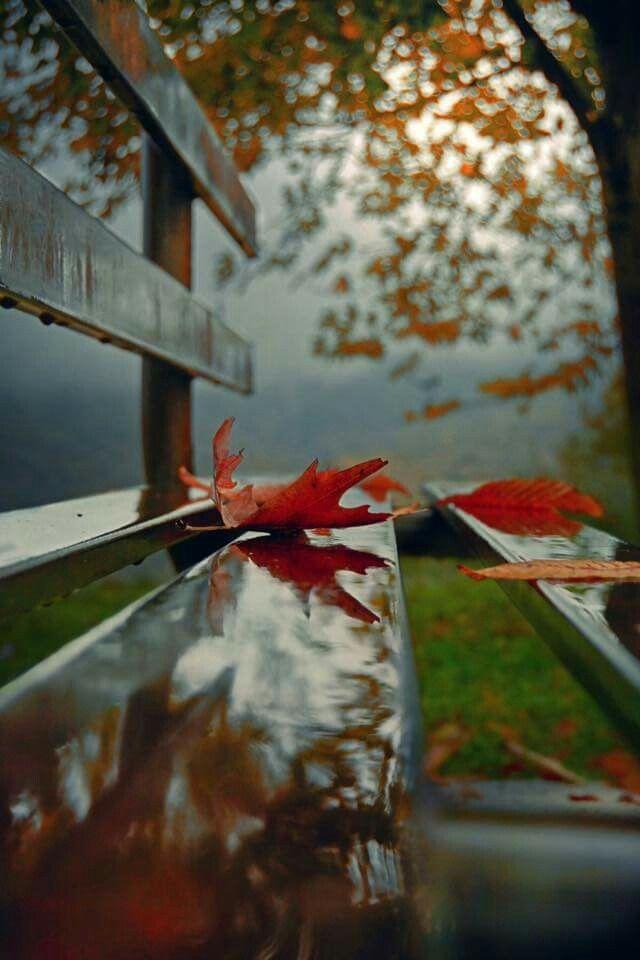 Gorgeous fall photo.