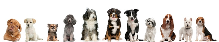 Quality Dog Supplies and Pet Supplies Online | Oliver's Pet Care